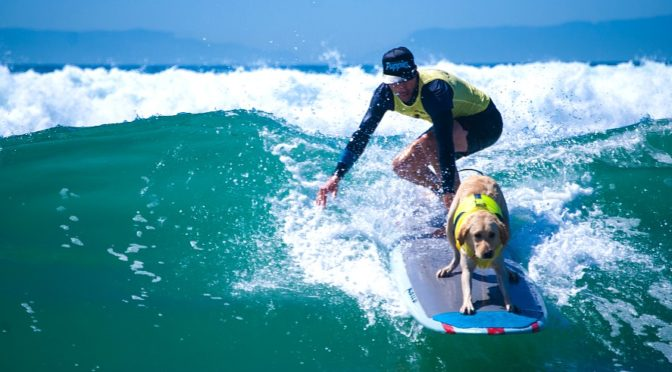 Surfing With Your Dog: Tips From a Pro